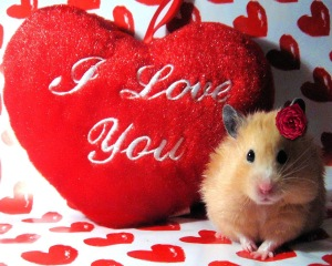 Nothing says love like this hamster with a rose in its hair.